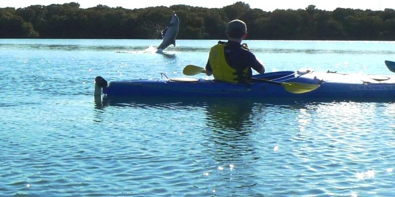 dolphin-tailwalk-n-kayak1